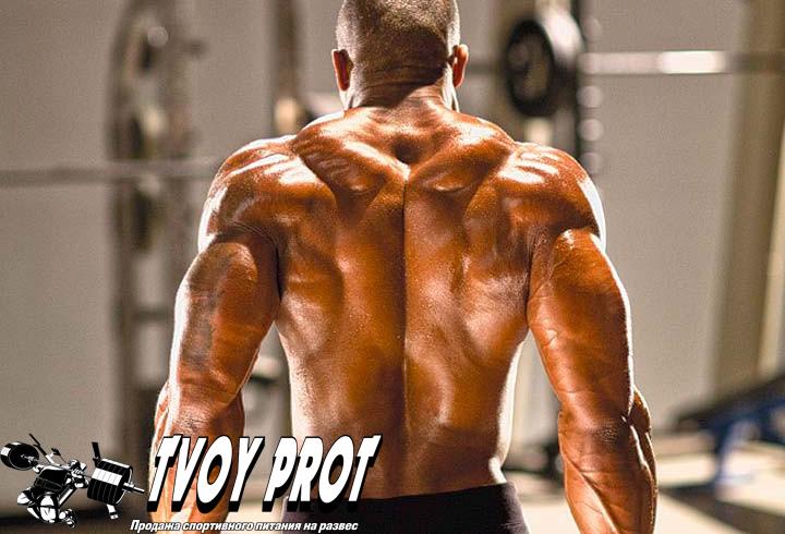 тренировка спины, базовые упражнения на спину