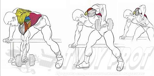 Упражнение для развития спинных мышц - тяга гантелей в наклоне